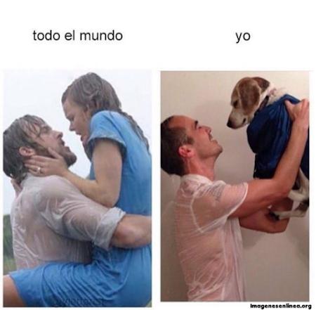 Fotos muy graciosas: amor con el perro
