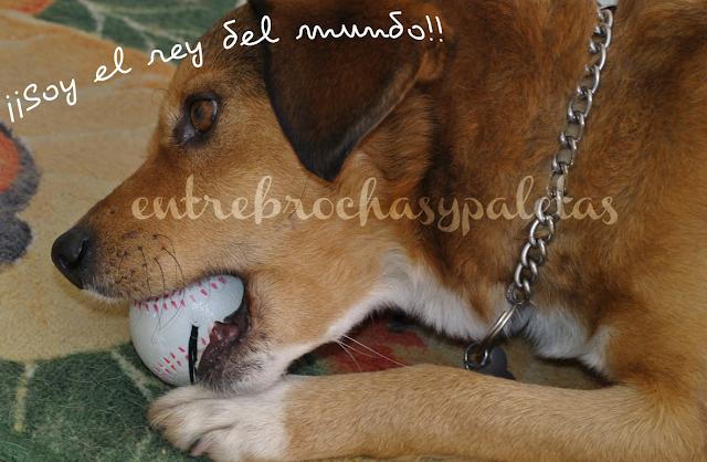 Tigre_mascotas