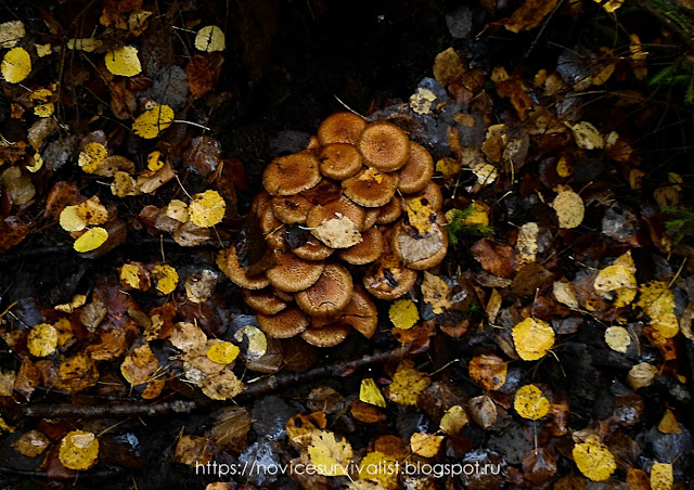 семейка грибов