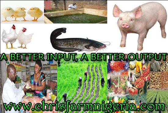 90 Profitable Agricultural business for Entrepreneurs/Investors/Business Plans