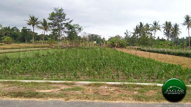 Tanah Sawah di Seyegan jalur Alternatif Jogja - Magelang