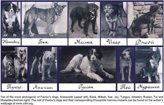 Pavlov'un Köpeklerinin Adları Nedir?