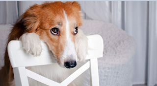 Σύμφωνα με επιστήμονες, ο σκύλος σου μπορεί να σε κάνει Ο,ΤΙ θέλει!