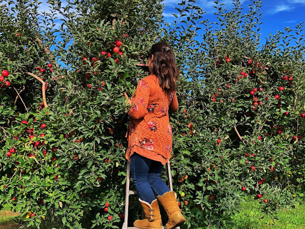 Fall Tradition: Apple Picking