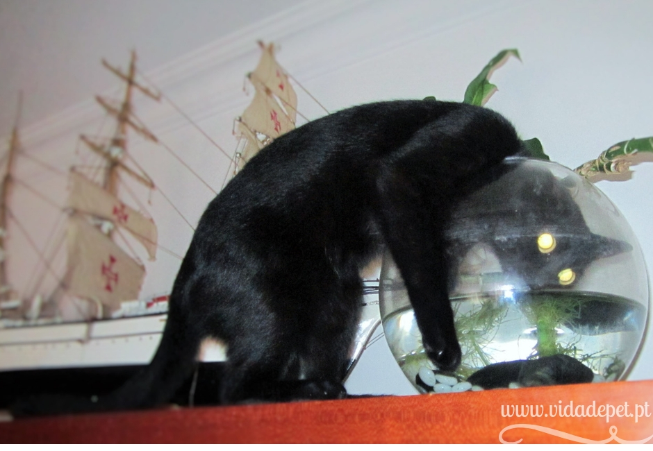 14 factos sobre viver com um gato + a vida de uma gata+ blogue de animais de estimação+ portugal + blogue vida de pet