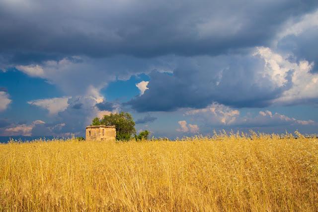Valensole-campi di grano