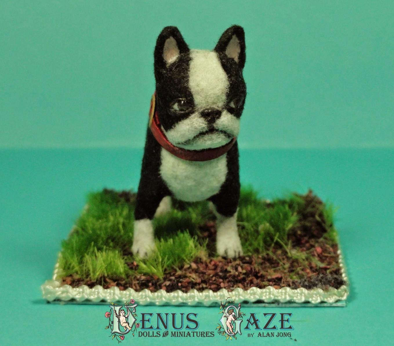 Venus Gaze Miniature Doll Art: Tiny Stare #1 Bostion Terrier