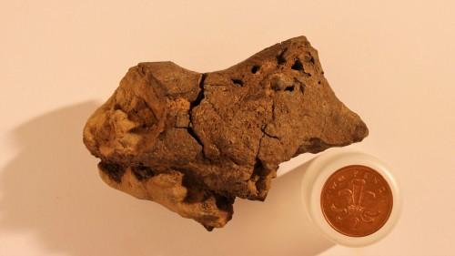 Επιστήμονες εντόπισαν για πρώτη φορά τον απολιθωμένο εγκέφαλο δεινοσαύρου της Κρητιδικής περιόδου