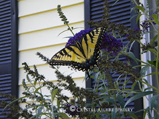 Yellow Tiger Swallowtail Butterfly 2010 from Butterfly Garden at Crystal Allure