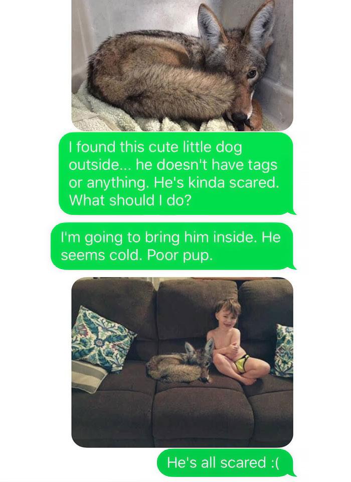 dog puppy coyote kayla eby