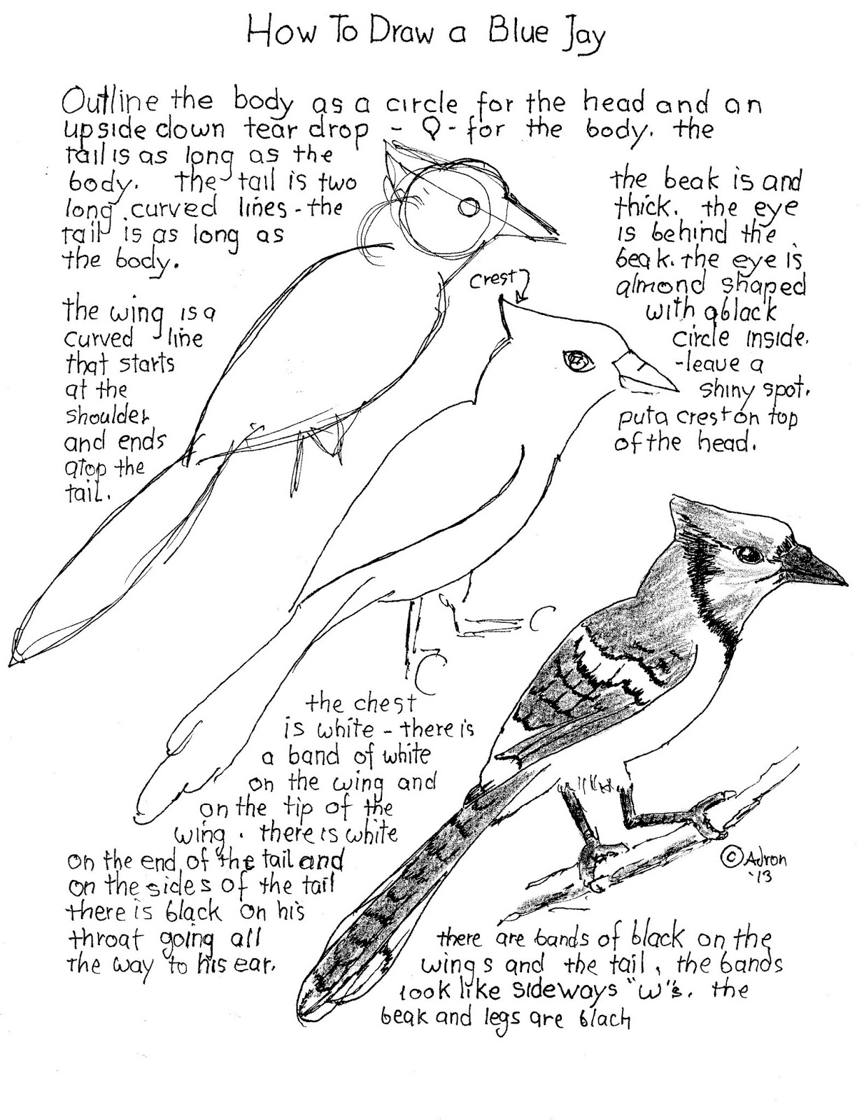 How To Draw Worksheets For The Young Artist How To Draw A Bluejay Worksheet