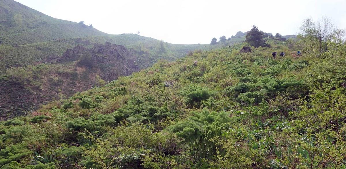 DSC08470 Panorama