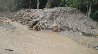 Banjir Agara - Parit Sumbat dan Kayu Gelondongan Berserakan, Air Melimpah ke Jalan Nasional