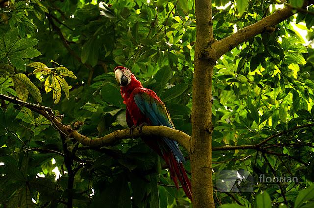 Egzotyczne zwierzęta w Randers Regnskov - Tropical Zoo w Danii