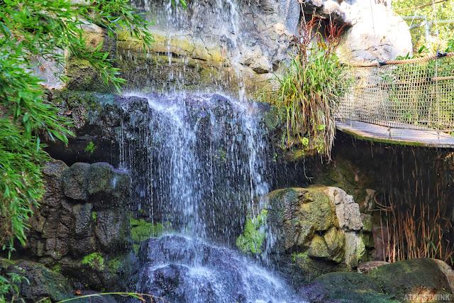 Diergaarde Blijdorp Rotterdam zoo waterfall