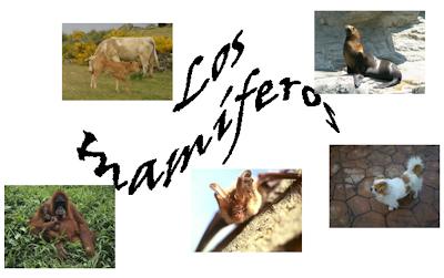 http://ceiploreto.es/sugerencias/cplosangeles.juntaextremadura.net/web/curso_3/naturales_3/mamiferos/mamiferos.html