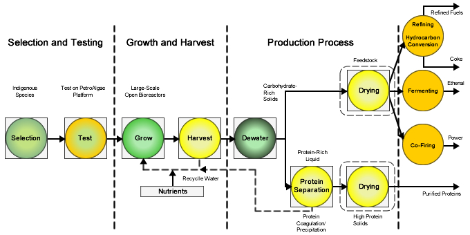 Algae Gas Diagram Trusted Wiring Diagram