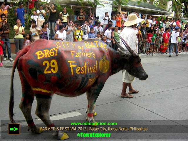 Batac City, Ilocos Norte | A Parade of Colorfully Painted Carabaos