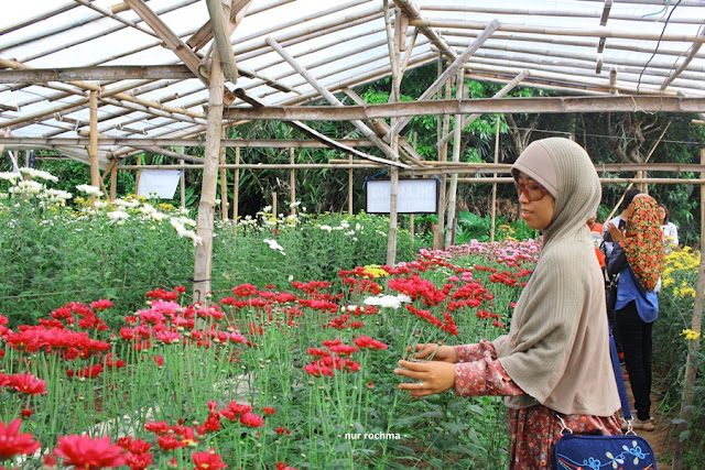 Setiya Aji flower farm
