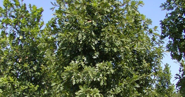Co horts what size tree should i plant for What should i plant in my garden