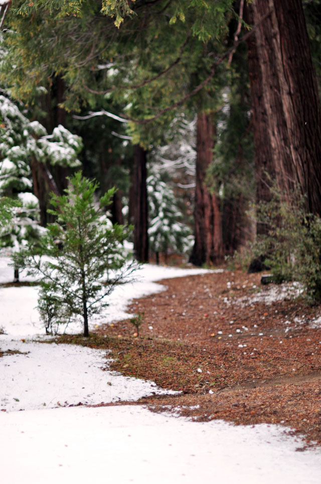 snowy pathway between the trees