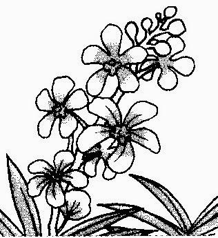Lukisan Pokok Bunga Kartun Cikimm Com