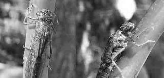 Penyerbukan dengan bantuan serangga
