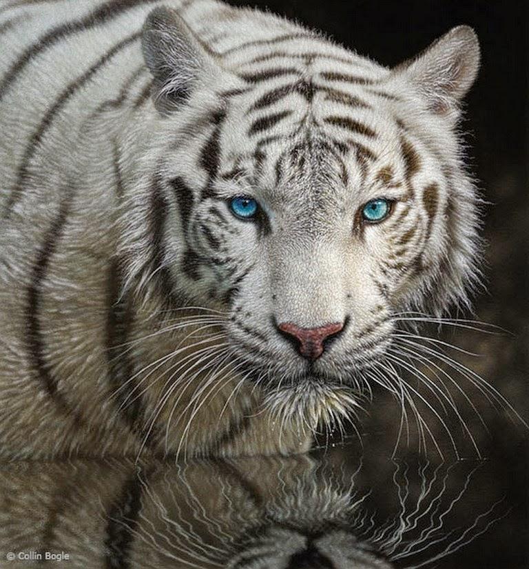 Imágenes Arte Pinturas Pinturas Realistas Al óleo De Animales