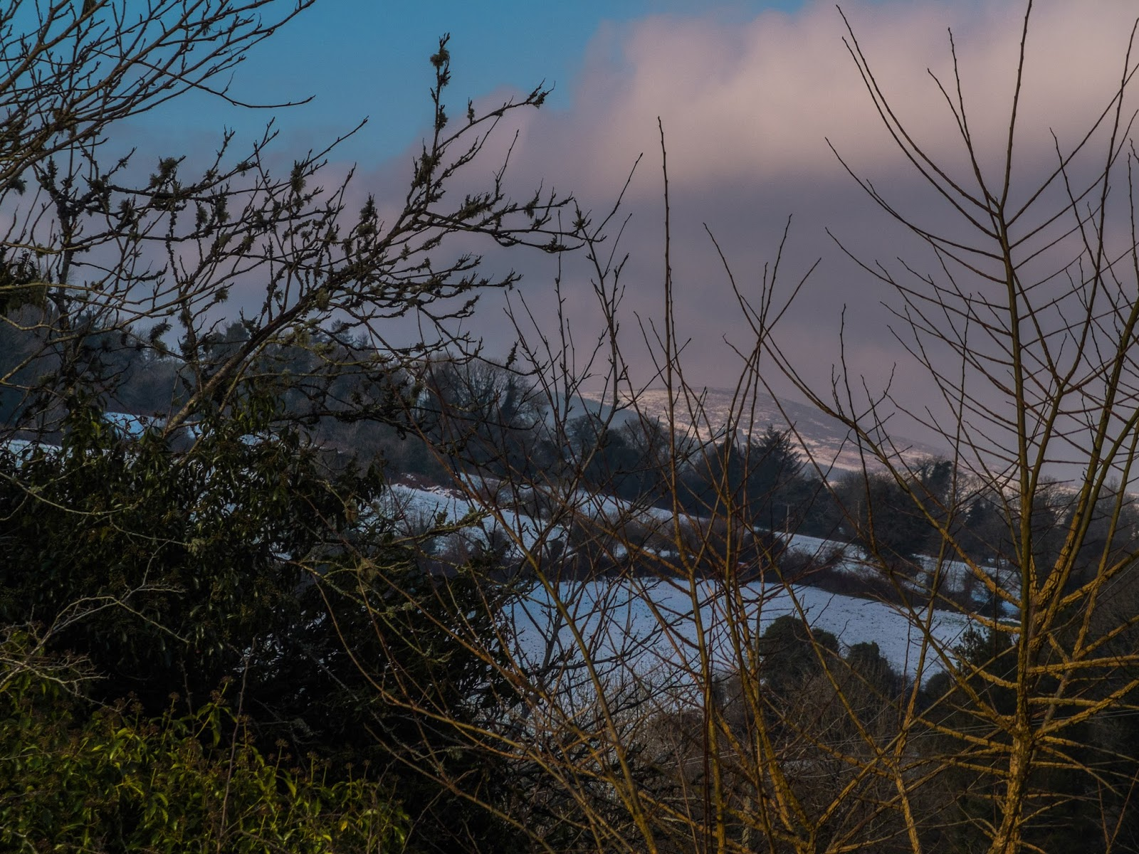 View of a snow covered mountain through branches at sunset.