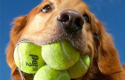Mayor número de pelotas sostenidas en la boca