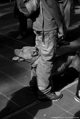 perro en la bendicion de mascotas