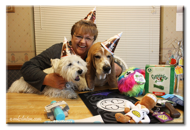 Pierre Westie, Bentley Basset Hound and I celebrate a birthday