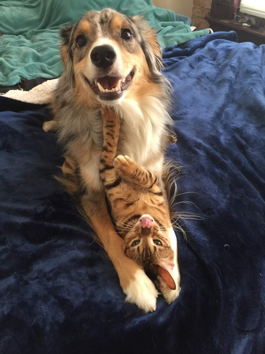 Funny animals of the week - 4 March 2016, best funny animal pictures, animal photos, cute animals