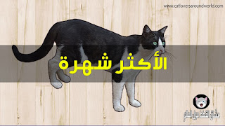 افضل انواع القطط حول العالم