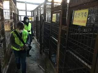 Biggest Dog Slaughterhouse Closed in South Korea
