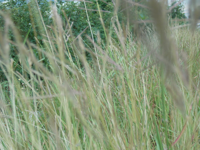 Grasses Images
