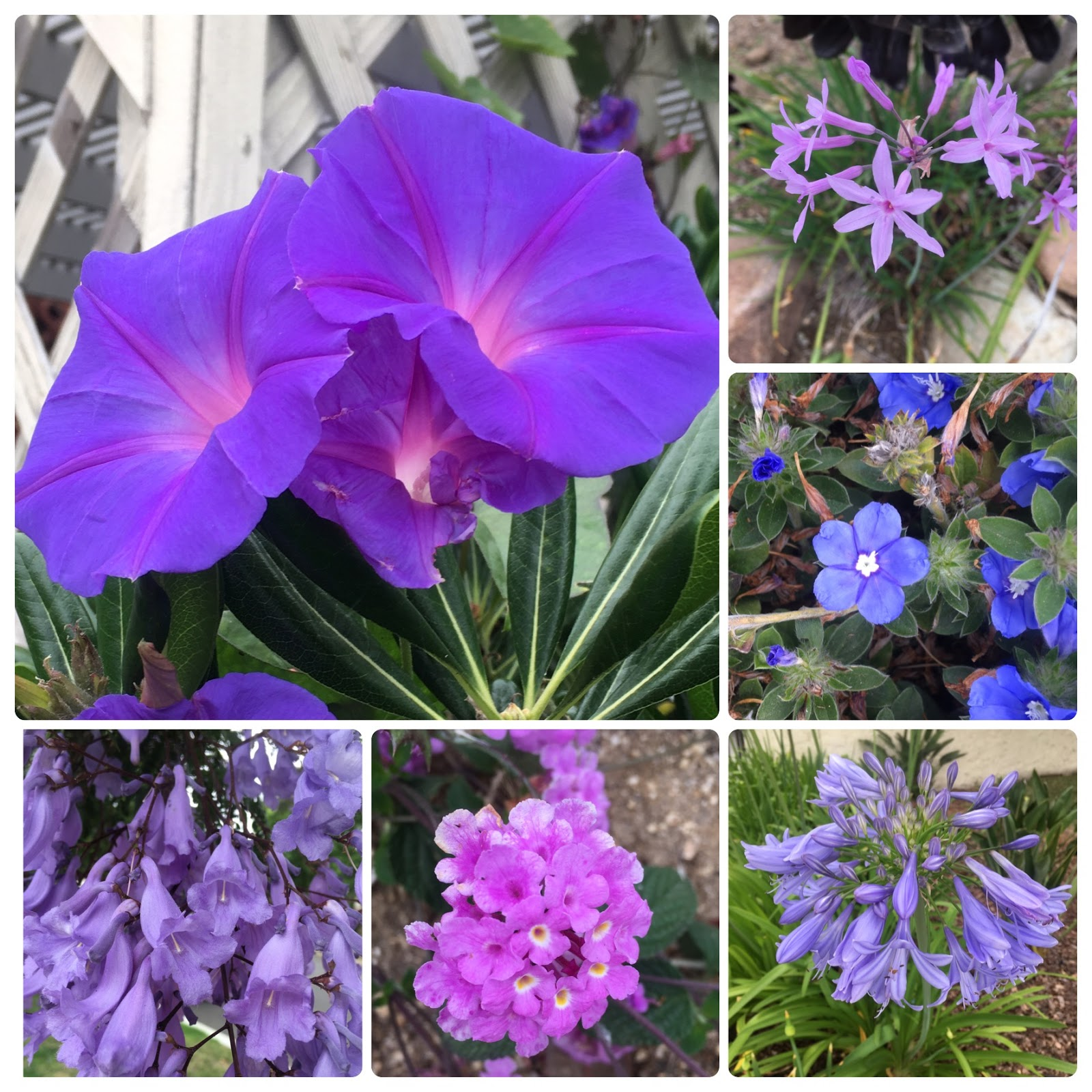 on our walk today i noticed that there seemed to be a lot of pretty purple plants blooming so thought iu0027d share them - Pretty Plants