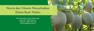 buah melon,budidaya melon,benih melon,nutrisi,vitamin,lmga agro