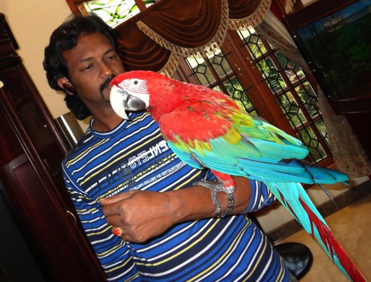 Preethi Farms (exotic birds breeders): Hand Tamed Parrots for sale