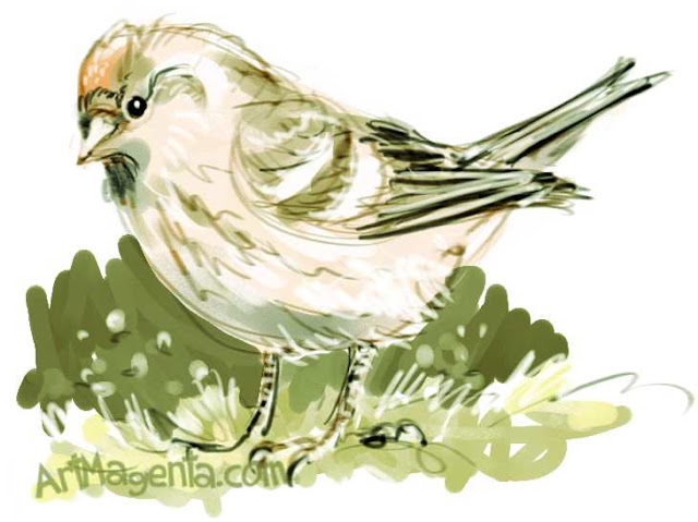 Redpoll is a bird drawing by ArtMagenta
