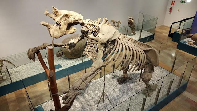 scheletro di megaterio nel museo di storia naturale di valencia