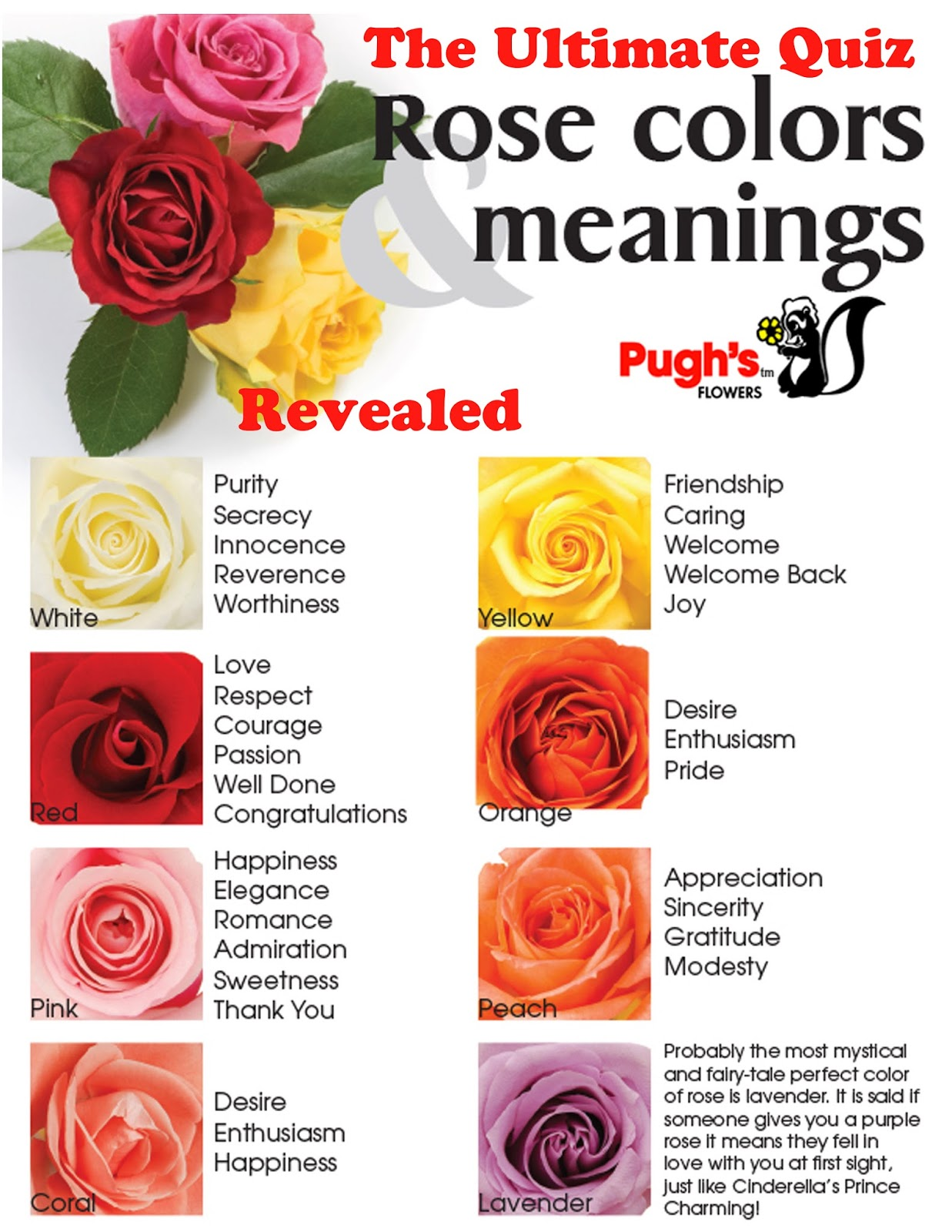 Flowers and meanings best 25 flower types ideas only on for What color is the friendship rose
