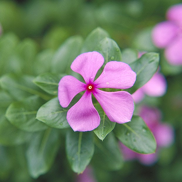 Kew Gardens - flower