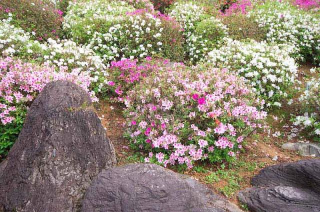 stones, rocks, flowers