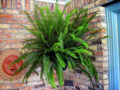 Jasa Tukang taman Surabaya tanaman hias minimalis