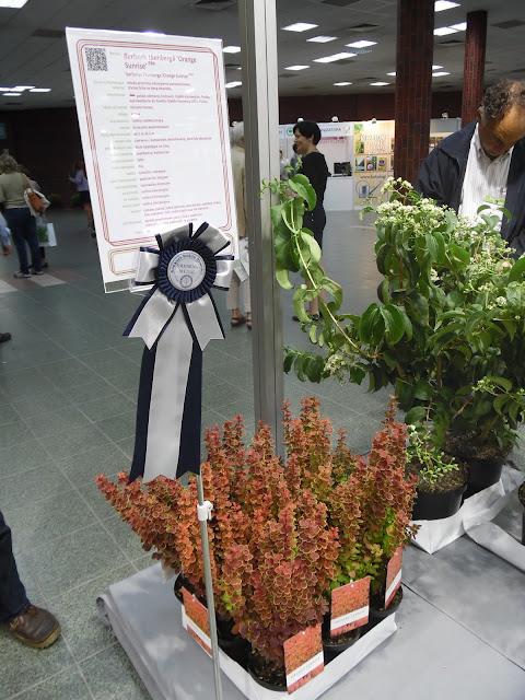 Konkurs Roślin Nowości, berberis thunbergii Orange Sunrise