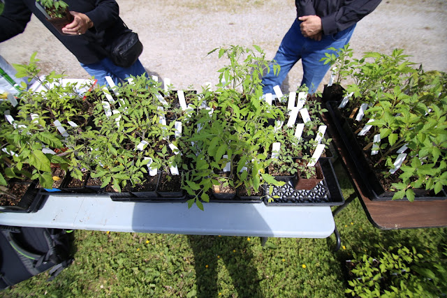 Plant Sale: Tomatoes, Hostas, Rhubarb and much, much more!