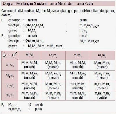 Meskipun aturan Mendel merupakan dasar dari perwarisan sifat Penyimpangan Semu Hukum Mendel
