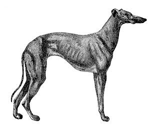 digital dog greyhound clipart illustration download image