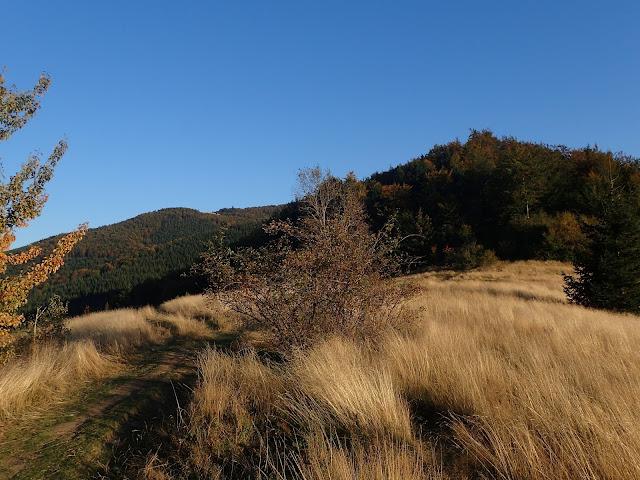 Zejście z Mogielicy w stronę polany Cyrla